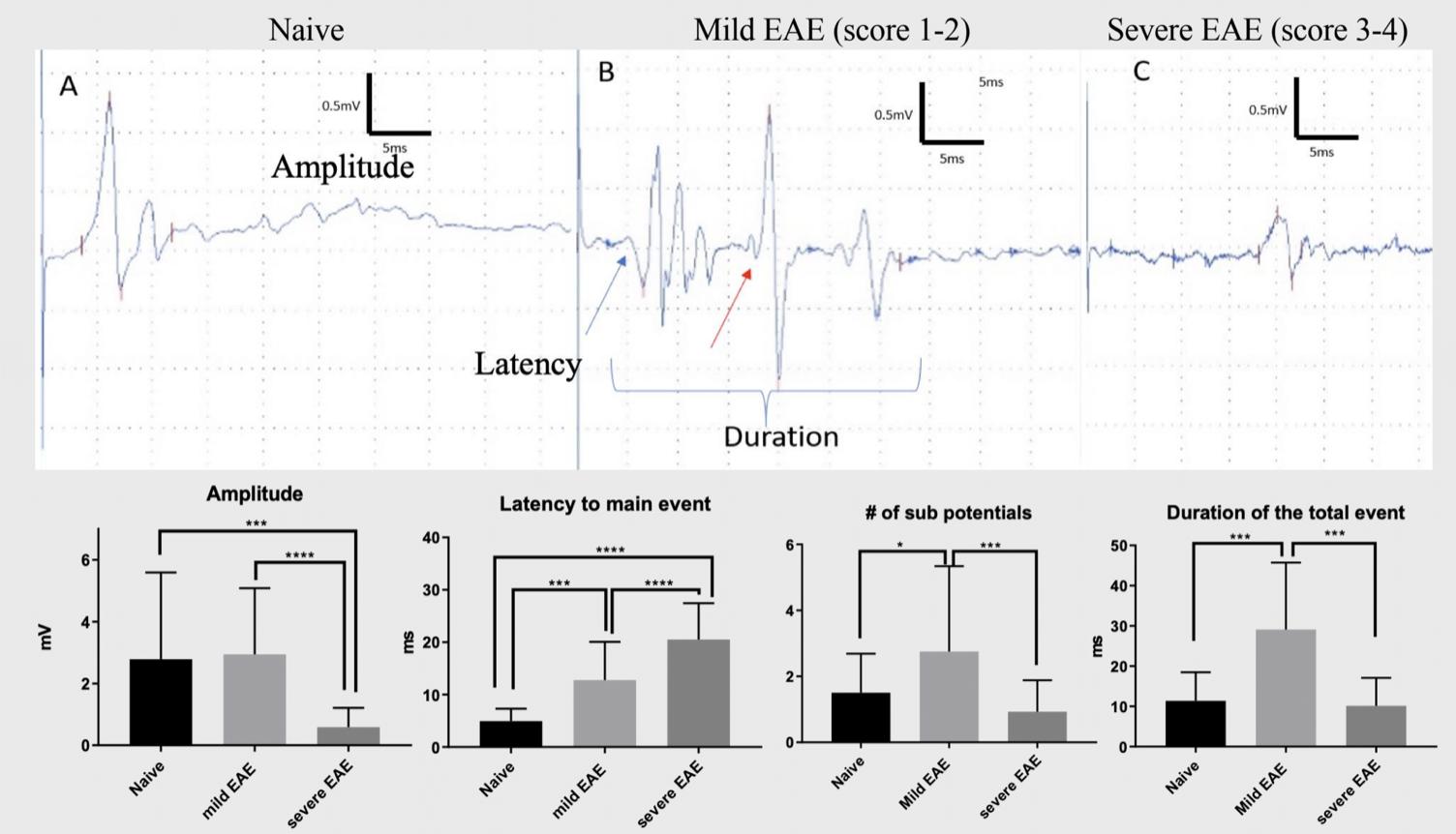 Motor action potential-MOG EAE