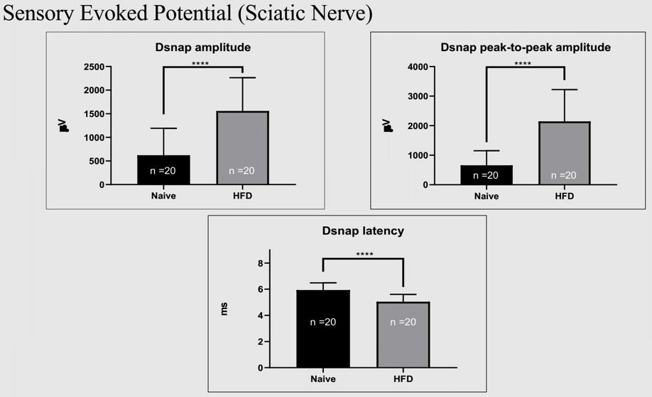 SEP_HFD neuropathy_mdbiosciences