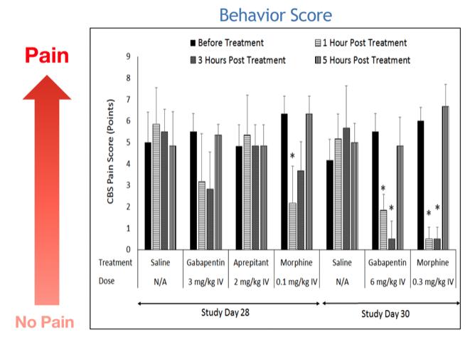 behavior score pig PNT model