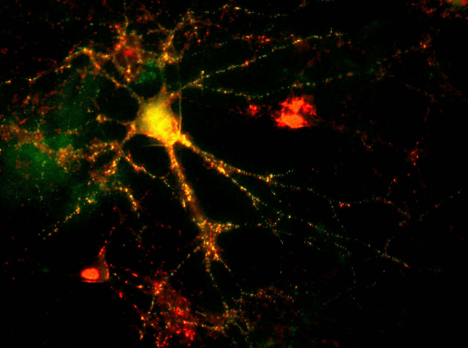 synaptic imaging